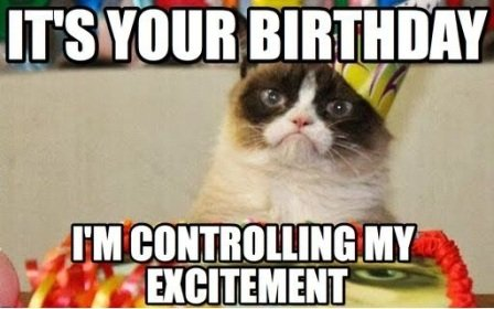 Bildergebnis für Happy Birthday Funny Cat Pictures