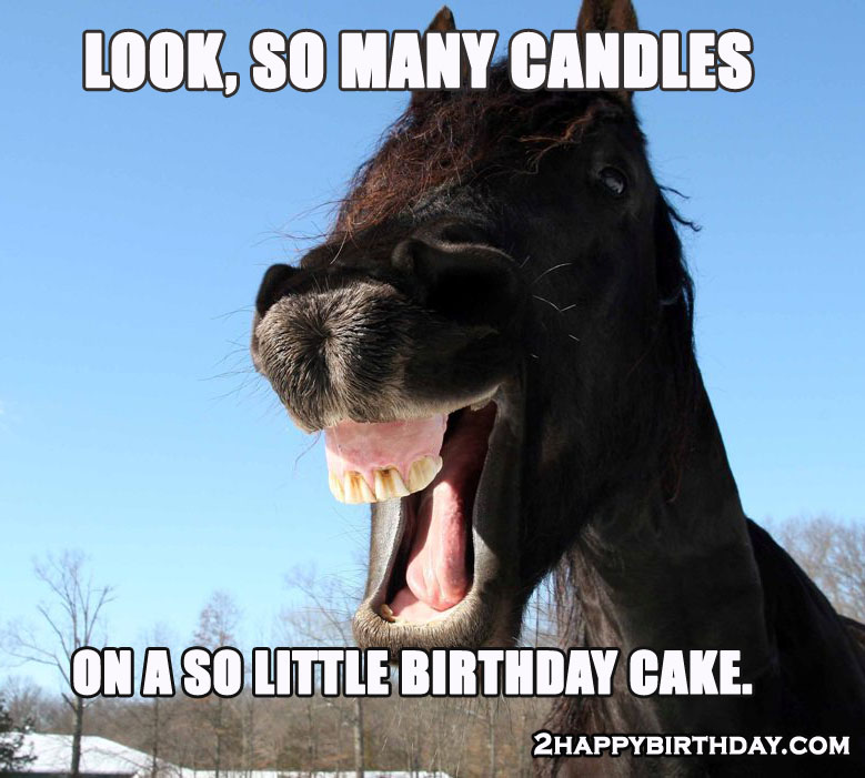 Horse Wishing Birthday