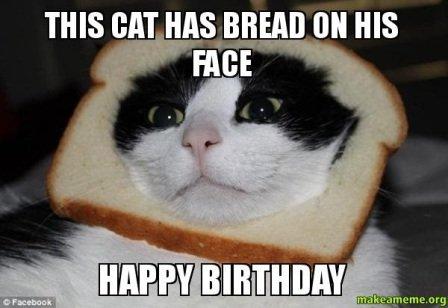 cat-happy-birthday-wish-meme