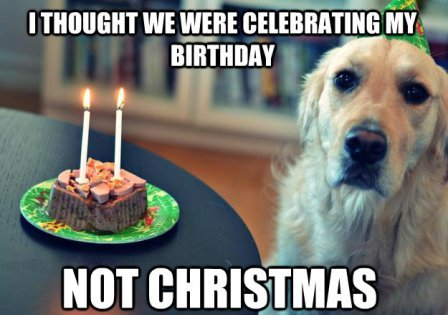 christmas birthday meme dog christmas birthday meme   2HappyBirthday christmas birthday meme