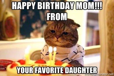 happy birthday mom cat meme funny happy birthday cat meme 2happybirthday