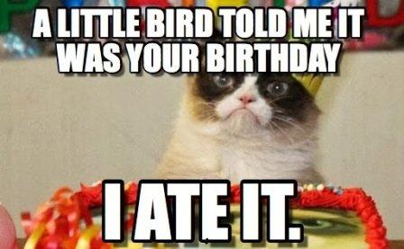 little bird ate by cat birthday meme funny happy birthday cat meme 2happybirthday