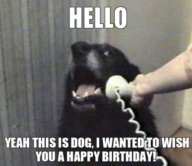 Top Dog Happy Birthday Funny Memes 2happybirthday