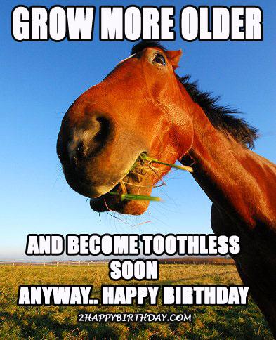 happy-birthday-horse