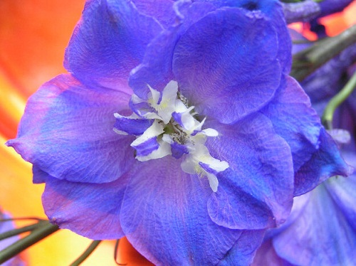 July Birth Flower Larkspur Water Lily 2happybirthday